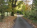 Lane through Garden Plantation - geograph.org.uk - 598901.jpg