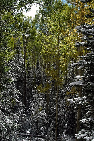 Manti-La Sal National Forest - First snow in La Sal Forest