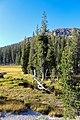 Lassen Volcanic National Park (b6dcc630-c309-48f4-a277-cde7fb9ad426).jpg