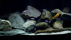 A flock of differently coloured fish in a rocky setting