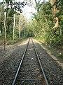 Lawachara National Park Srimongol Sylhet Bangladesh 8.JPG
