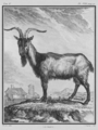 Le Bouc - Billy Goat - Gallica - ark 12148-btv1b23002520-f10.png