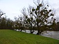 Le Doubs en crue - panoramio (1).jpg