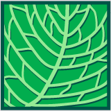Leaf morphology cross venulate