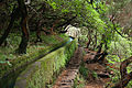 Levada Madeira.jpg