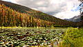 Lily Pad Lake (4848541646).jpg