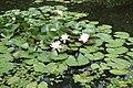 Lily pond (SG) (14986847483).jpg