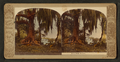 Live oak trees, from Robert N. Dennis collection of stereoscopic views.png