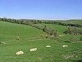 Livestock farmland - geograph.org.uk - 440889.jpg