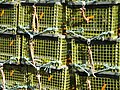 LobsterTraps5ty13981.jpg