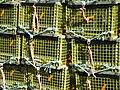 LobsterTraps5ty13981.jpg