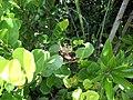 Locust in Shark Valley^ - panoramio.jpg