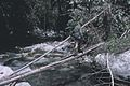 Log bridge - naturally fallen or man felled.jpg