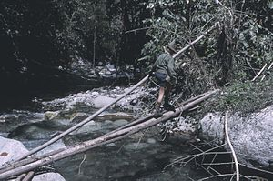 Log bridge - Image: Log bridge naturally fallen or man felled