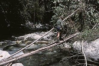 Log bridge - Image: Log bridge naturally fallen or man felled