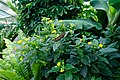 London - Kew Gardens - Princess of Wales Conservatory 1987- Ten Climatic Zones - Butterfly Exhibition IV.jpg