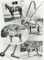 Lovers of the horse - brief sketches of men and women of the Dominion of Canada devoted to the noblest of animals. - (1909) (14765514632).jpg