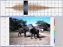 Ficheiro:Loxodonta africana oral rumble visualized with acoustic camera (25fps) - pone.0048907.s003.ogv