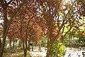 MADRID A.V.U. JARDIN PLAZA PEÑUELAS - panoramio (10).jpg