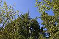 MRNP — Kautz Creek Trail (21851915616) (2).jpg
