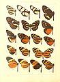 Macrolepidoptera15seit 0073.jpg