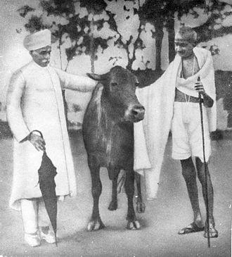 Madan Mohan Malaviya - Malaviya with Gandhi.