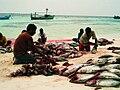 Maldivesfish4.jpg