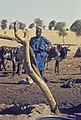 Mali1974-156 hg.jpg