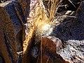 Mammillaria guelzowiana (5729374185).jpg