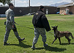 Man's best friend keeps Nellis safe 150629-F-UN699-050.jpg