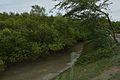 Mangrove - Godkhali - South 24 Parganas 2016-07-10 4941.JPG