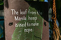 Manila Hemp (15622608418).jpg
