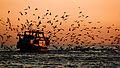 Marbella fishing boat (6607404757).jpg