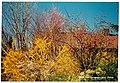 March Spring Kaiserstuhl - Magic Rhine Valley Photography 1990 - panoramio.jpg