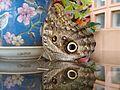 Mariposa matinal.jpg