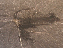 Two types of dating fossils-in-Those Kawa