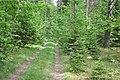Meža ceļš, Skrundas pagasts, Skrundas novads, Latvia - panoramio (1).jpg