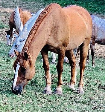 Meravigliosi cavalli liberi.jpg