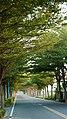 Minzhu Street running through a tunnel of trees.jpg