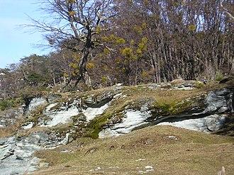 Tierra del Fuego Province, Argentina - Mossy landscape, Tierra del Fuego.