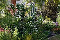 Mixed border in a cottage garden at Boreham, Essex, England 01.jpg