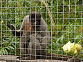 Monkey Sanctuary 8.jpg