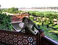 Monkey in Agra Fort (1580903877).jpg