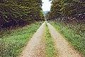 Montenoison FR21 foret IMG3476.jpg