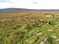 Moorland near Farlam Currick - geograph.org.uk - 608182.jpg