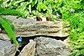 Morpho Helenor, Morpho Bleu - panoramio.jpg