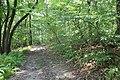 Mountain Road (Johnstown Highway) - panoramio (39).jpg