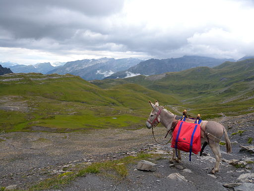 Mountain hiking with a donkey