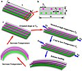 Multishape active composites by 3d printing of digial smps.jpg