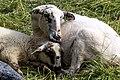 Mum hugging her child (14311967656).jpg